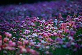 wildfloweres
